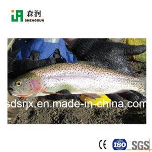 犬猫の鳥の餌の生産ライン魚食糧機械