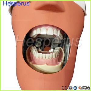 歯科柔らかいゴムの取り外し可能な28/32PCS歯モデルNissin 200互換性のあるHesperus