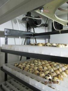 Hhdの渡される自動鶏の卵の定温器のセリウム(YZITE-6)