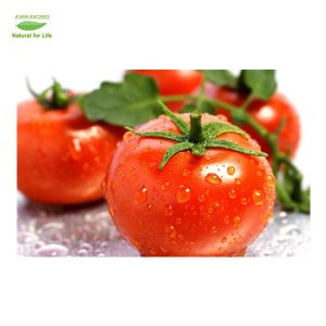 Tomate-Auszug-natürlicher Lykopen-Puder-Lykopen-Preis
