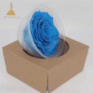 大型の永遠のばらはローズの維持された花を卸し売りする