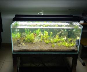 高品質の魚飼育用の水槽のアクアリウムの装飾