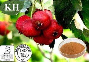 Hawthorn Extract flavonóides 5% 20% por UV