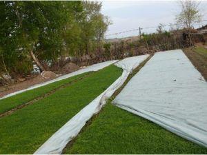PP Spunbond tejido no tejido de la agricultura resistentes a UV