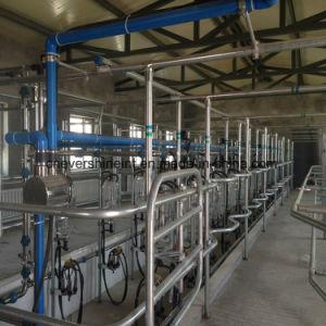 12のシート自動牛搾り出すパーラー機械システム電子測定