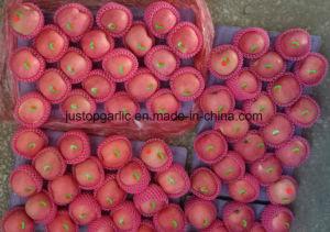 FUJI rosso fresco Apple dalla Cina