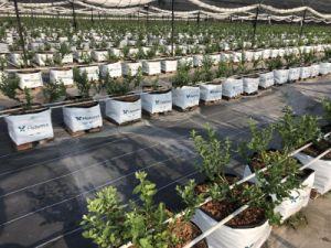120g de tecido preto Barreira de plantas daninhas para prevenir a grama de tecido