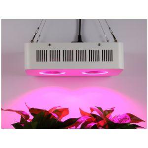 400W LEDは軽い屋内を育てる
