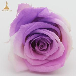 結婚祝い及びクラフトは等級の勾配の傾斜路ローズの長続きがする花を維持した