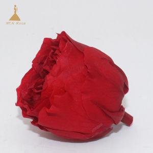 オフィスの装飾のための4-5cm赤いデイヴィッドオースティンの不断の花
