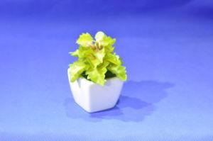 水気が多いプラントグウSD0367の人工的なプラントそして花