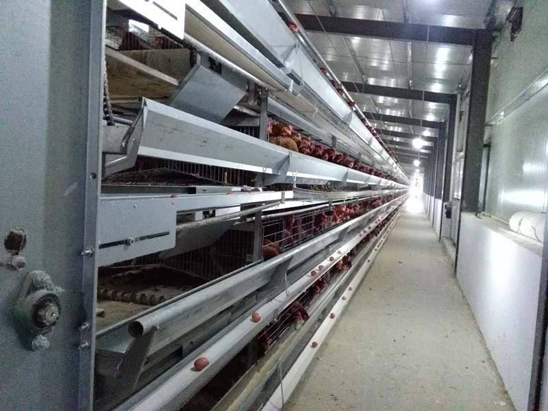 Steel Structure Confined Poultry Chicken House with Equipment (KXD-PCH1)