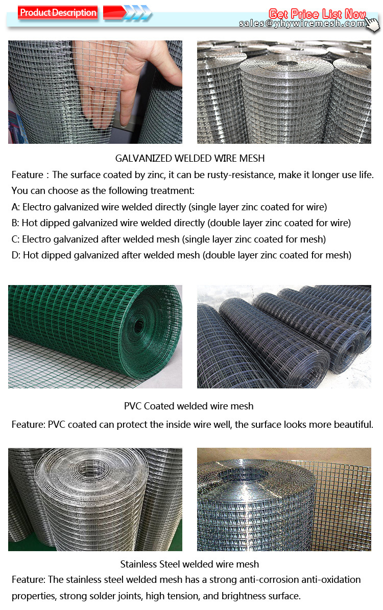 Rust-Proof Zinc Coated 25mm Small Hole Welded Wire Mesh for Aviary ...
