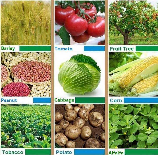 Compound Fertilizer, NPK 16-16-16