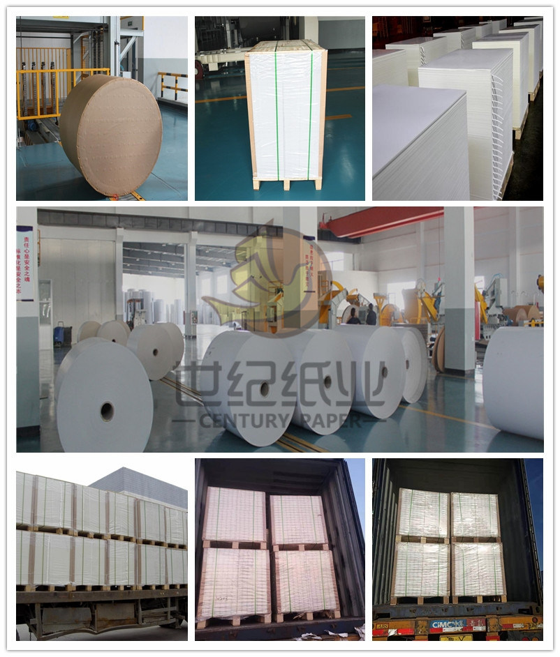 Coated Fbb/Ivory Board/Folding Box Board for Packing and Printing