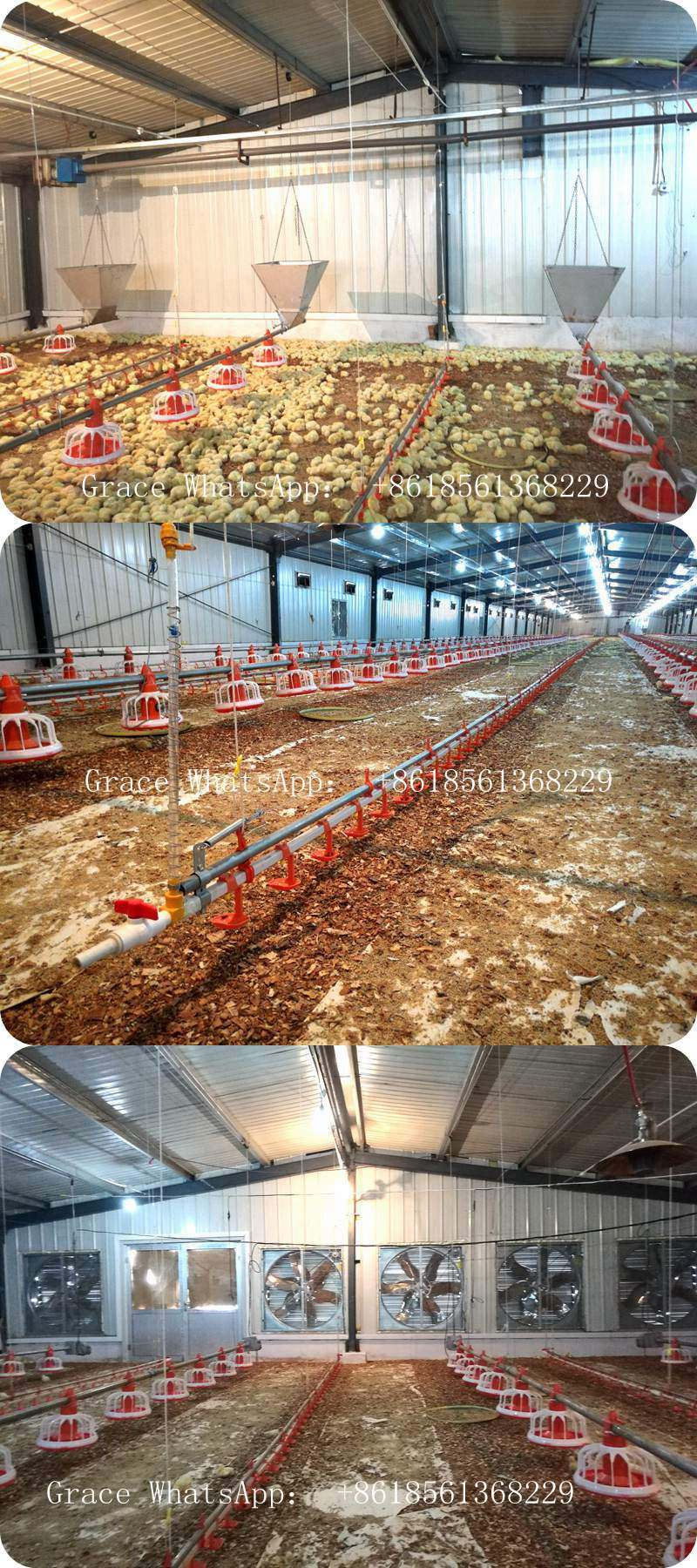 Automatic Poultry Equipment for Broiler with Customized Poultry Shed Construction