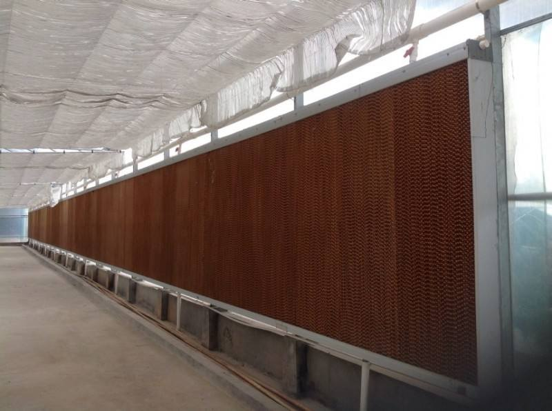 Film/Glass/PC Sheet Commercial Greenhouse with Competitive Price