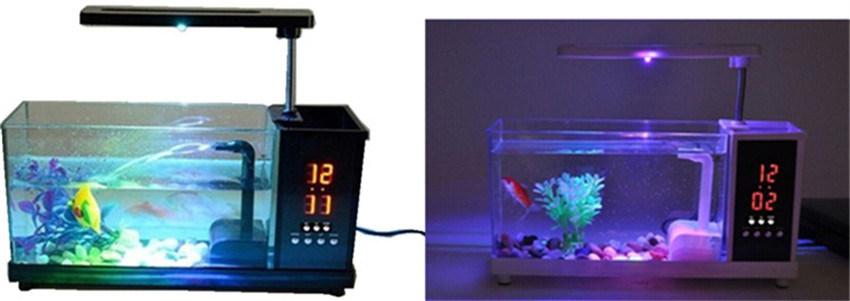540+ Ide Design Aquarium Mini HD Yang Bisa Anda Tiru
