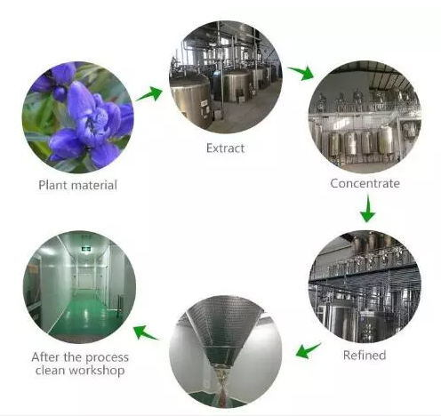 Wild Yam Extract Free Sample Natural Progesterone Kof-K HACCP Certified Factory Supply Diosgenin Wild Yam Powder Extract