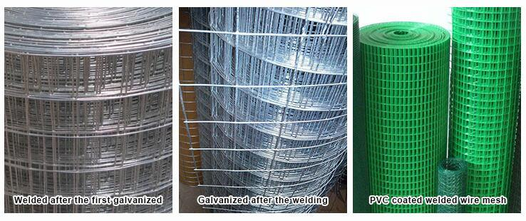 China Hot Sale Electro Galvanized Welded Wire Mesh Panel
