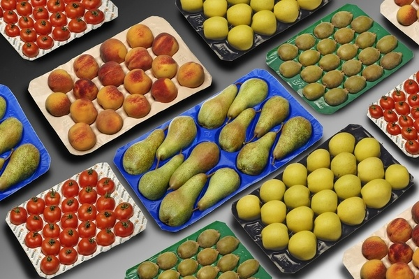 Made in China Costco Hot Sale Disposable PP Plastic Fruit