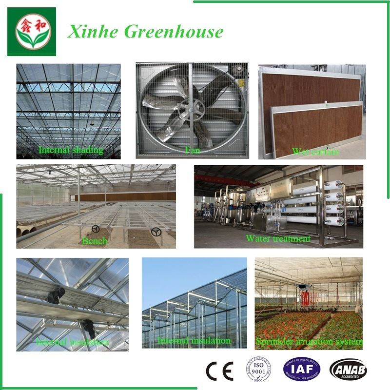 Agriculture Glass Greenhouse for Tomato
