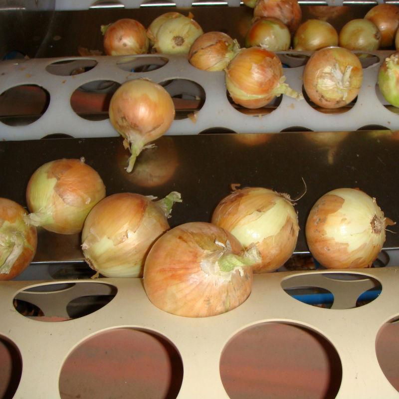 Fresh Onion, Chinese Yellow Onion, Jinan Onion